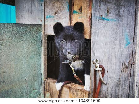 Homeless puppy in a shelter for dogs peeking out of the kennel.