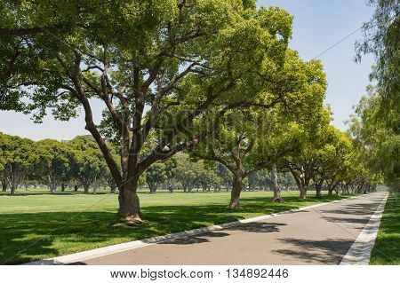 Trees On Park Lane