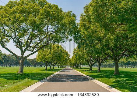 Street Shade Under  Trees