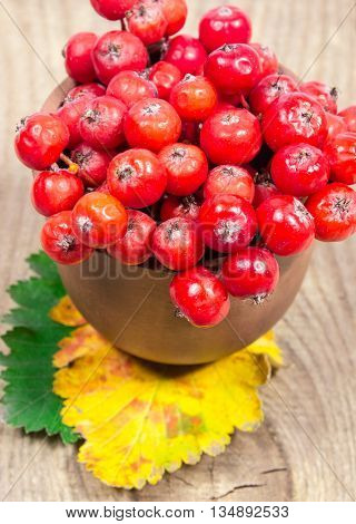 Fresh Fruit Of Hawthorn. The Concept Of Alternative Medicine.