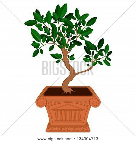 Little green bonsai tree in brown pot