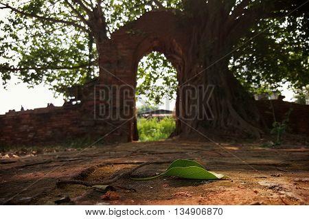 Wat Ph-ra Ngam , leaf Ayutthaya thailand