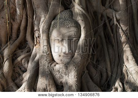 Head of Buddha in the tree roots , Wat Mahathat