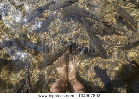feet and fish in waterfall with sun light