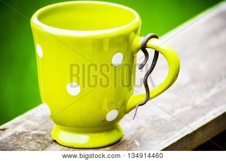 red bellied snake on spotted coffee cup