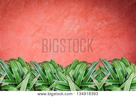 Green plant on red wall background on handmade creative red wall background
