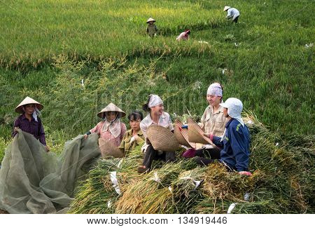 Ninh Binh, Vietnam, April 24, 2016 farmers, suburban, Ninh Binh, Vietnam, boiled rice harvest