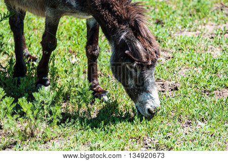 Ass At The Farm