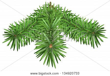Green Fir branch. Pine branches isolated on white background. Illustration in vector format