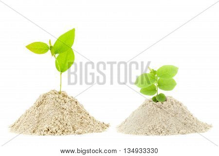 green plant growth on pile sand isolated on white background