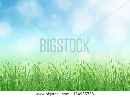 Fresh green grass and sky natural background.