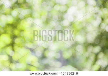abstract green nature background with blurry bokeh defocused lights.