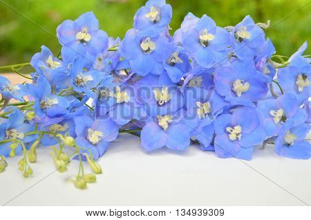 delphinium, blue, view, herbaceous, plants, buttercup, family, planting, care, cultivation, seeds, flowers, floral, bouquet, taste, variety, flower-bed, long-term, white, space, inscription, background