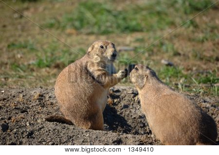 Prairie Dog Pals