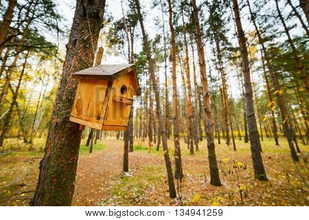 Wooden Birdhouse On A Pine Tree.