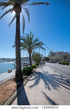 Seaside Biking Route With Marina And Palm Trees