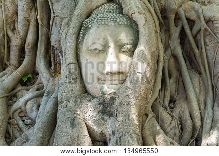 Head Of Buddha Statue In The Tree Covered By Roots At Wat Mahathat Temple