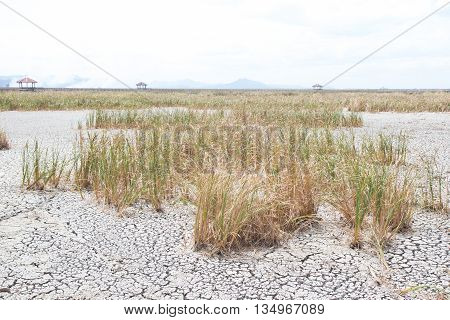 dried dead grass on dry earth and cracked ground texture broken split soil land