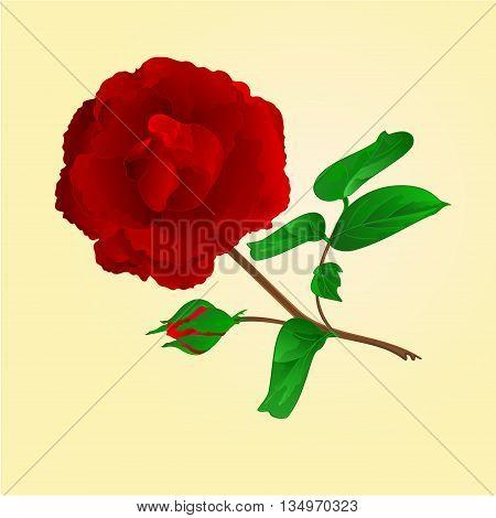 Twig Purple Rose and bud vintage vector illustration