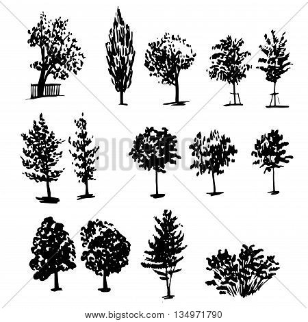 drawing collection of 14 elements of different types of trees graphic ink sketch hand drawn vector illustration
