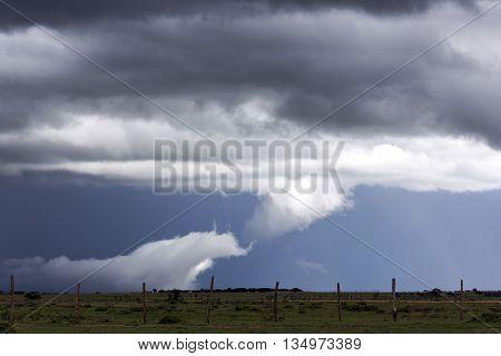 Storm clouds with rain shower over the savannah in the wet season at Masai Mara, Kenya, Africa