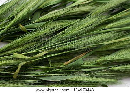 Green Spikelets Background