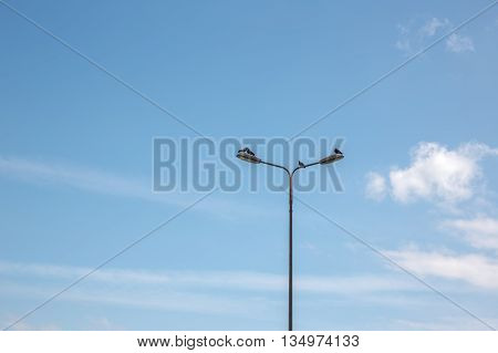 One pair of pigeons cooing about love on a pole against the sky. The second pair of pigeons in a quarrel.