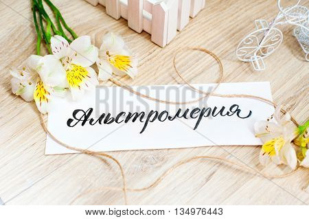 sheet of paper with Word Alstroemeria and flowers on light background.