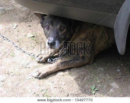 tired watchdog