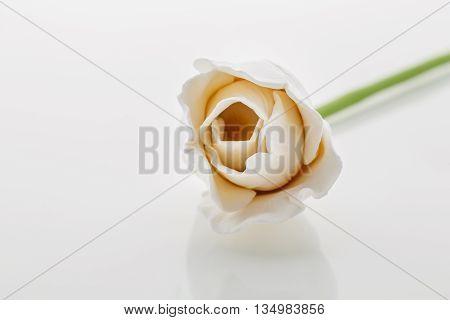 Beautiful handmade art clay tulip flower. Closeup over white background.