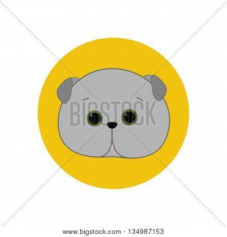 Scottish Fold Cat on a yellow background. Vector illustration