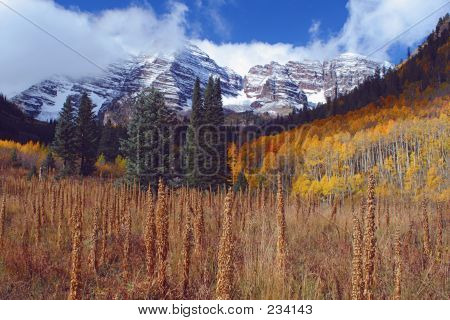 Maroon Bells, Tall Weeds