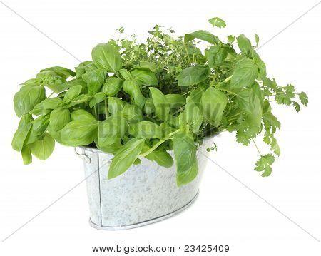 Assorted fresh herbs in metal pot