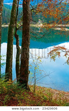 Autumn Tree And Synevir Lake