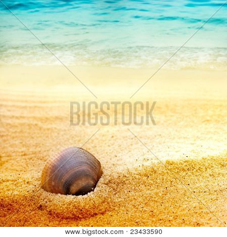 Sea Shell On Fine Sand