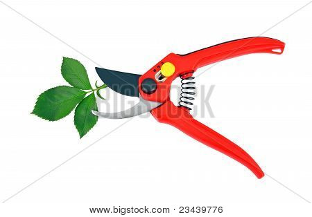 Garden pruner and green leaf