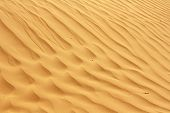 Dunes Of The Desert. Beautiful Wave Patterns Found In A Sand Dune In The Desert. Sand Dunes In The D poster
