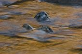 foto of engadine  - Stones in golden flowing water - JPG