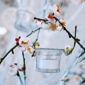 White And Green Tree Branch With Blossoming Buds, Flowering Tree Branches With White Flowers And A G poster
