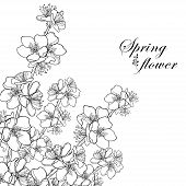 Vector Corner Bouquet With Outline Blooming Apricot Flower Bunch In Black Isolated On White Backgrou poster