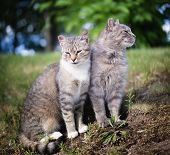 Portrait Of Two Beautiful Tabby Cats In A Park poster
