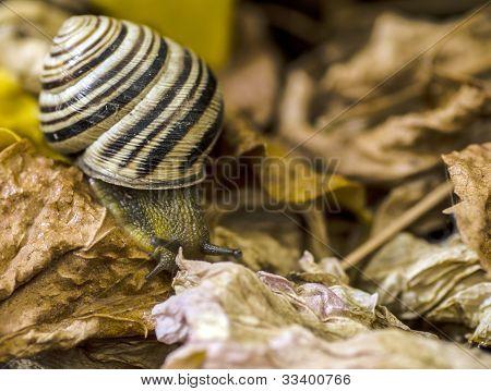 snail full size