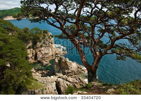 tree growing in the rocks