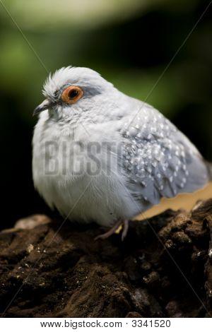 Bloated Bird