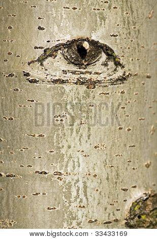Tree Bark With Eye design