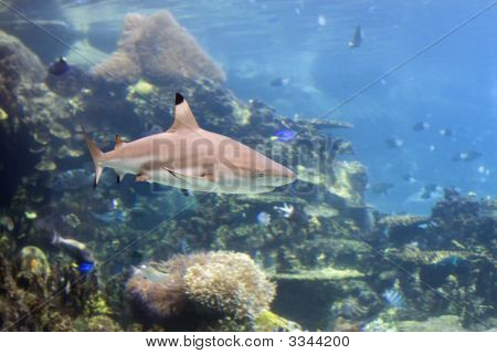 Sharkrf