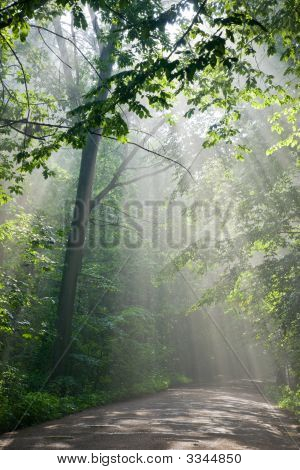 Ground Road Crossing Old Deciduous Forest With Beams Of Light
