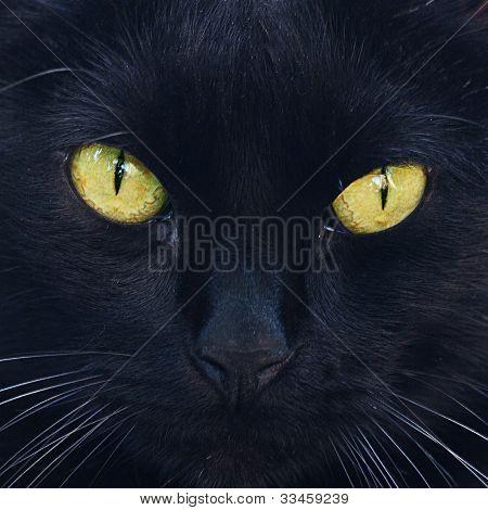 Retrato de um gato preto ao ar livre