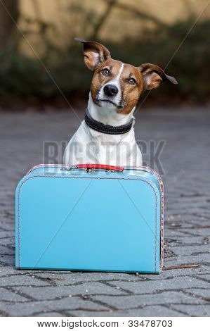 homeless dog with  a blue big bag