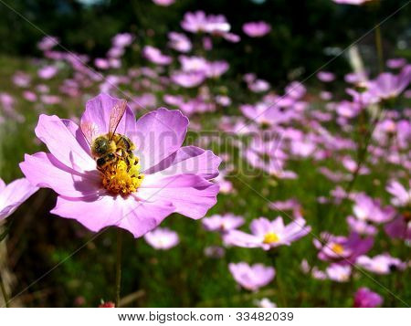 Bee in a field of flowers